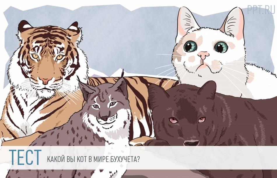 Тест: бухучет в мире кошачьих